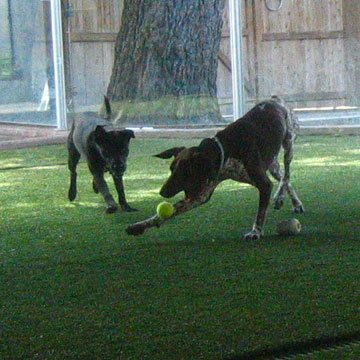 Blue dog ranch los angeles dog day care dog boarding for Dog kennels los angeles